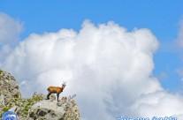 Camoscio, il ritorno del re delle rocce – Escursione Monte Bove, con un tecnico laureato esperto di camosci
