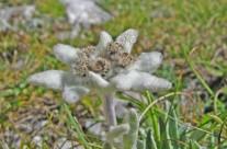 Fiori (flora) del Lago di Pilato, scrigno di biodiversità!