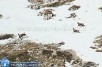 I Camosci e l'Aquila del Monte Bove