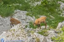 Escursione ai Camosci 08 Agosto – Foto