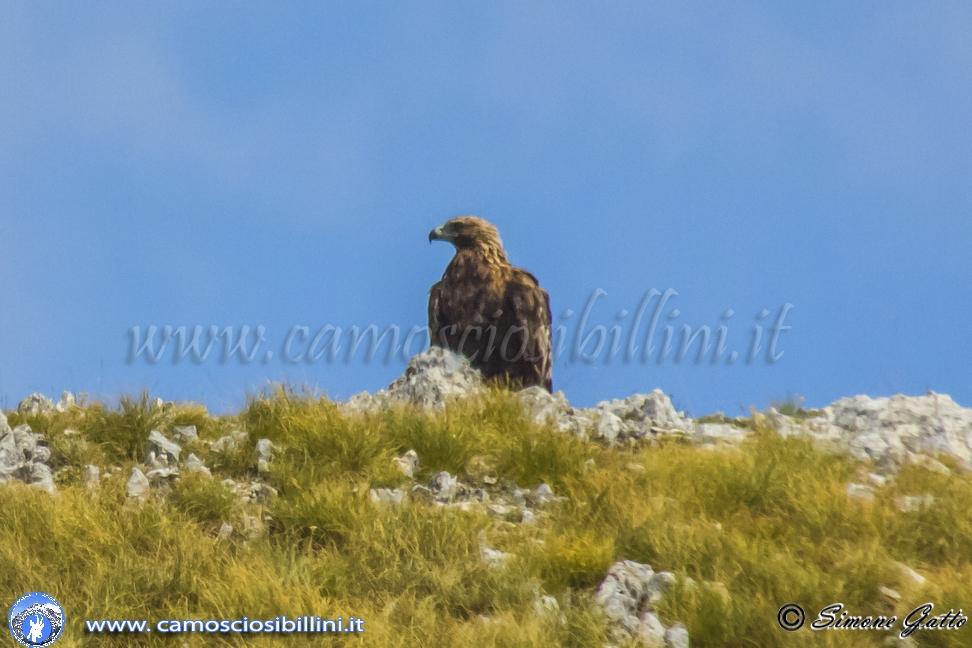 Solo un'altro giorno fra camosci ed aquile del Monte Bove – Le Foto