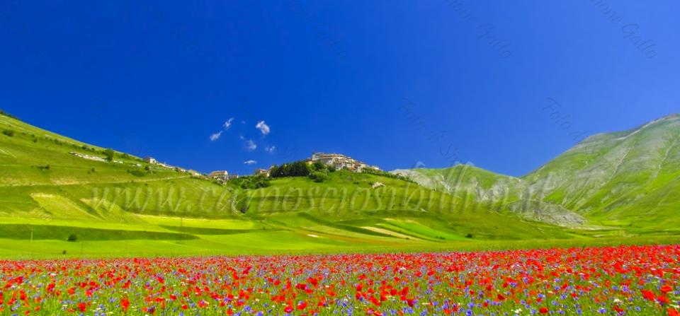 Escursione Fotografica alle Fioriture di Castelluccio – 29 Giugno