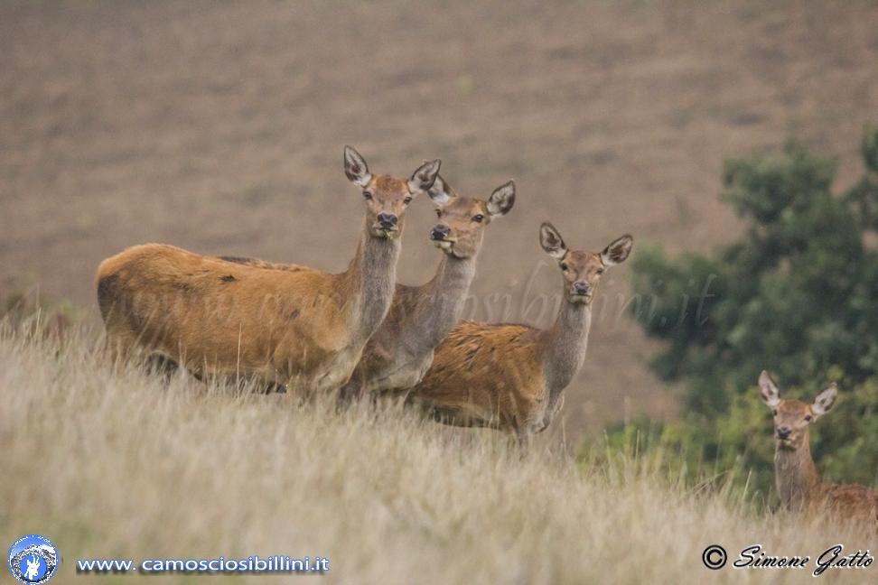 Cervi al Tramonto – Escursione per l'avvistamento dei cervi