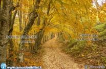 I BOSCHI COLORATI DI CANFAITO – WORKSHOP FOTOGRAFICO – 8 Novembre
