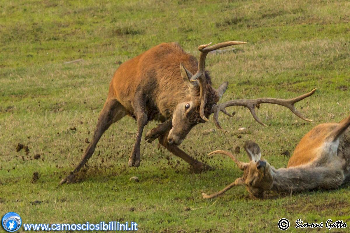 30-1 Ottobre BRAMITO dei Cervi nei Sibillini