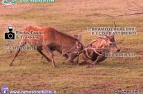1-2 Ottobre BRAMITO dei Cervi nei Sibillini