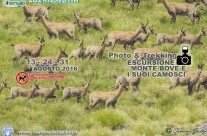 24 Agosto Escursione ai Camosci e le Creste del Monte Bove – Agosto 2016