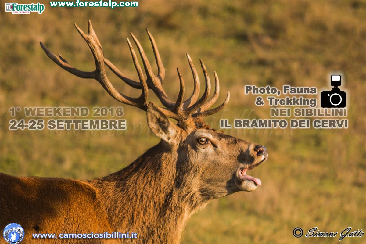 24-25 Settembre BRAMITO dei Cervi nei Sibillini