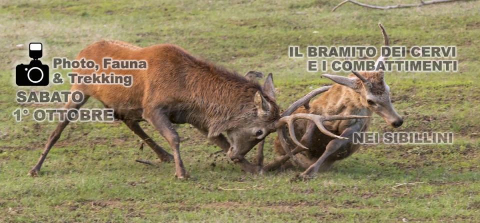 1° Ottobre 2016 – BRAMITO E COMBATTIMENTI AL TRAMONTO SUI SIBILLINI