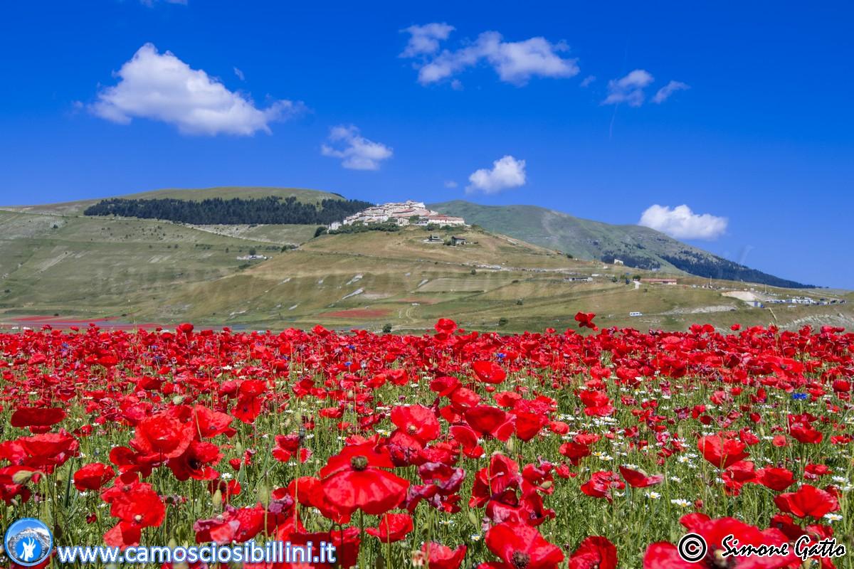 2017: Castelluccio riuscirà a seminare grazie al via libera di ANAS