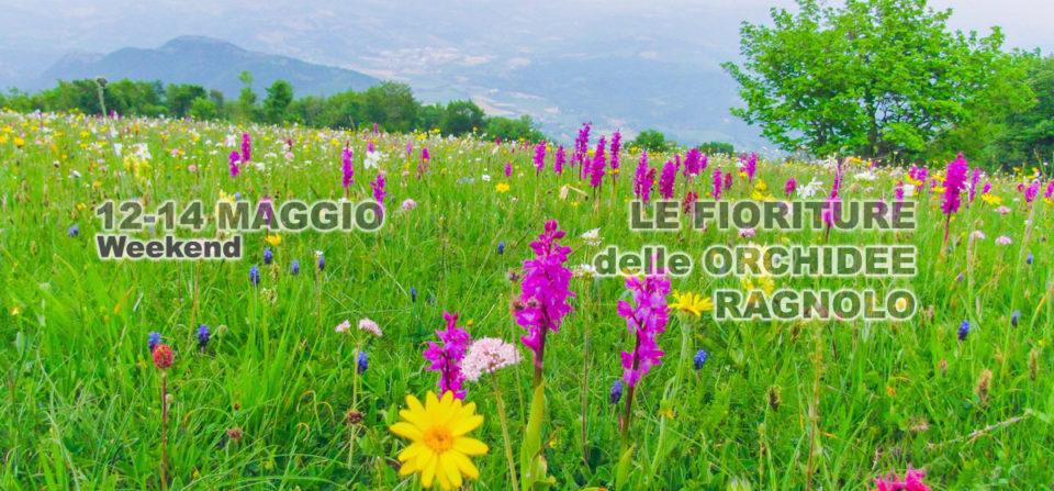Weekend delle Orchidee dei Sibillini 12-14 Maggio 2017