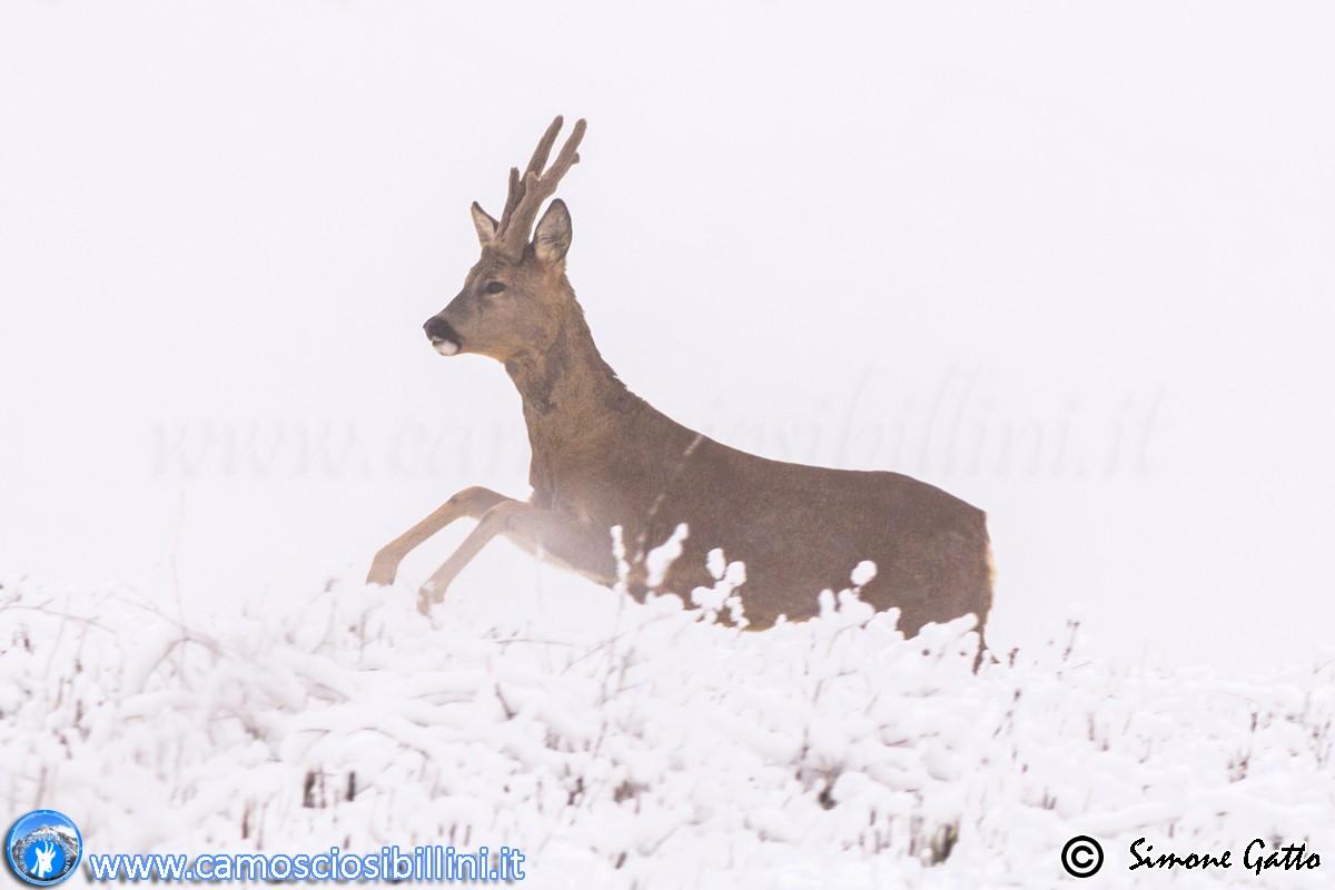 Il Capriolo e la neve….