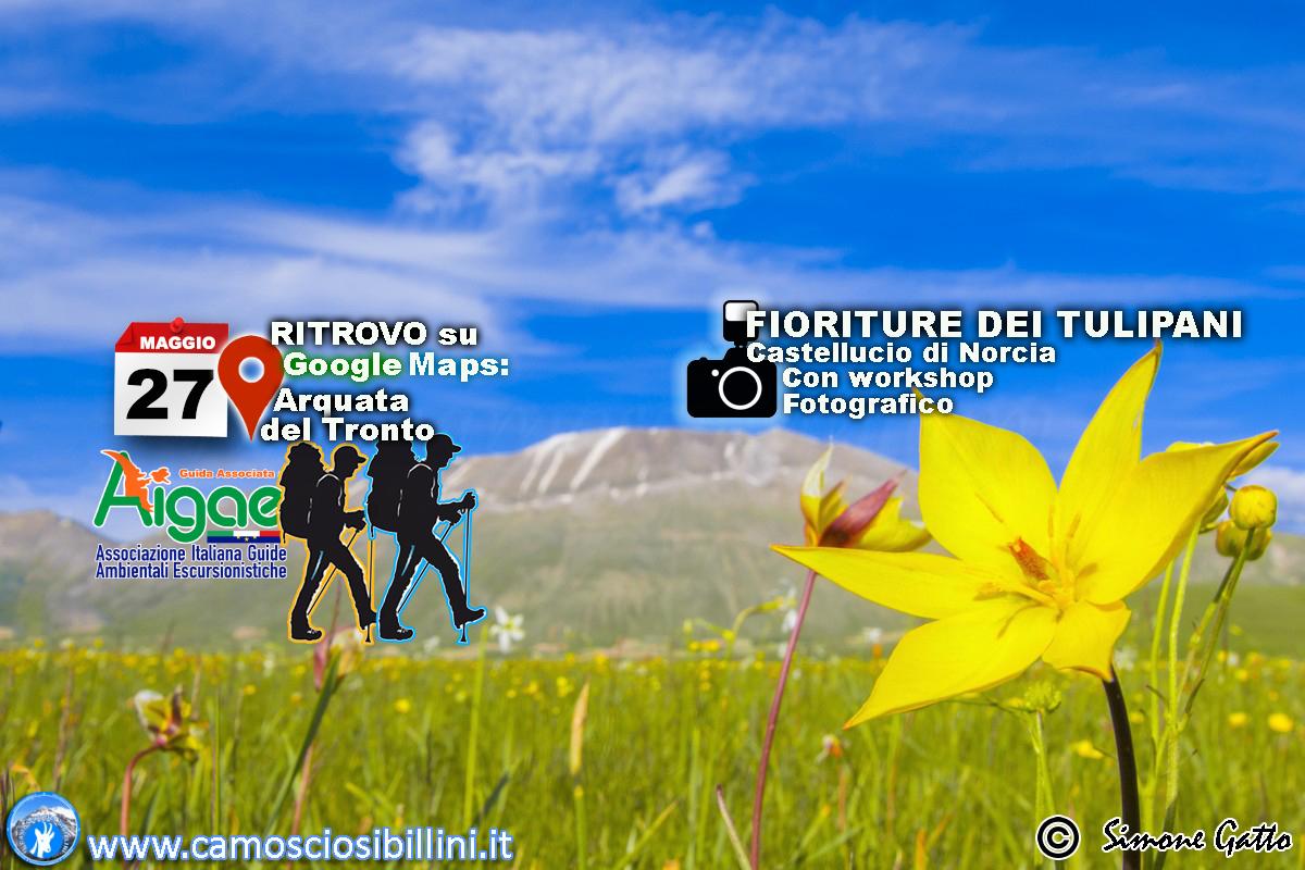 24 Maggio 2020 – Fioritura dei Tulipani – WorkShop