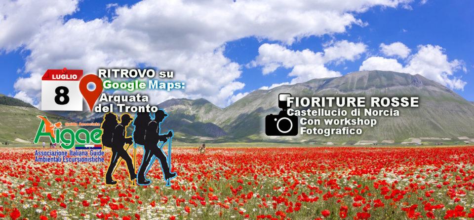 Escursione FOTOGRAFICA alla FIORITURA DI CASTELLUCCIO Domenica 9 Luglio 2019