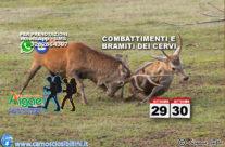 29-30 Settembre BRAMITO dei Cervi nei Sibillini