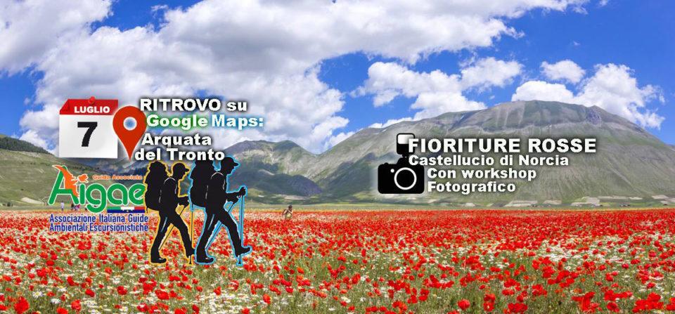 Escursione FOTOGRAFICA alla FIORITURA DI CASTELLUCCIO Domenica 7 Luglio 2019
