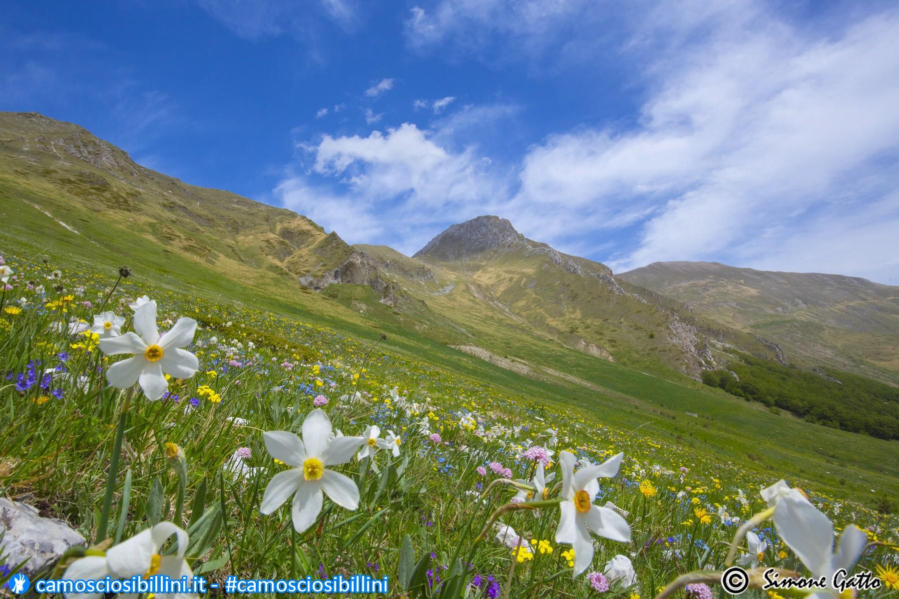 Alta Val Tenna in fiore