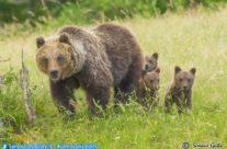 Un orsa speciale