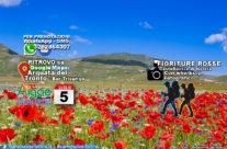 2020 WORKSHOP FIORITURA CASTELLUCCIO 5 LUGLIO 2020 – IL ROSSO
