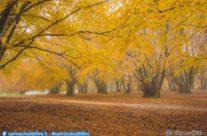 Il foliage a Canfaito