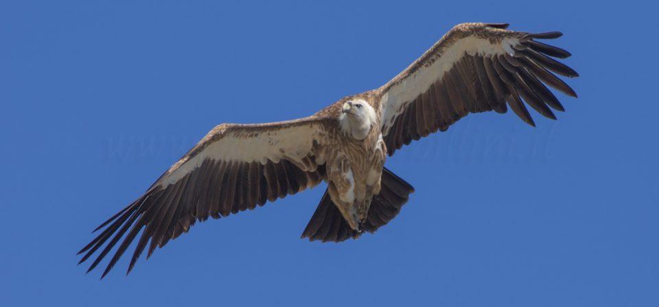 Giornata internazionale degli Avvoltoi
