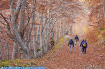 Foliage in Val di Panico
