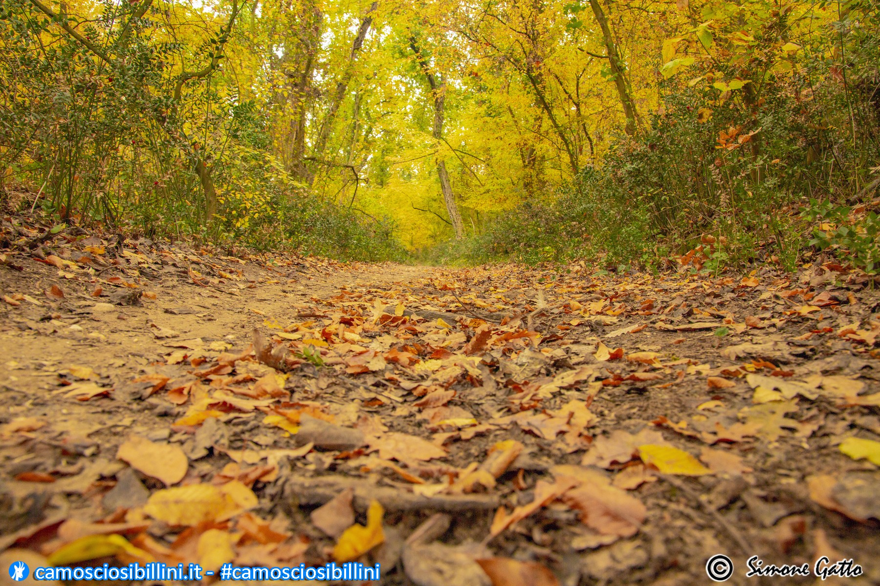 Foliage alla Selva di Castelfidardo