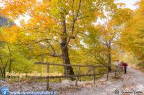 Foliage nelle Marche, oltre a Canfaito c'è di più!