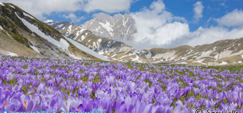 Le fioriture di Crocus a Campo Imperatore